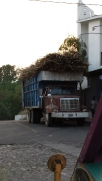 Truck loaded with cut sugar cane about to enter the village