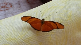 Butterfly on my couch
