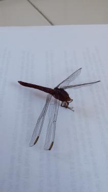 Dead dragon fly found on the floor