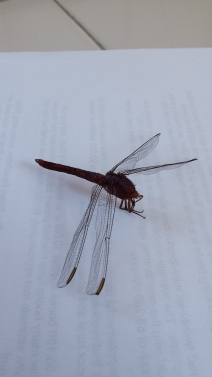 Dead dragon fly found on the floor