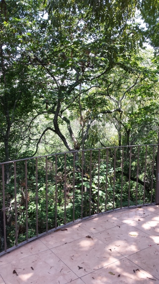 View over the railing on Ted's patio. We are close to the tops of the very tall trees