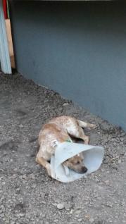 el perro - pobrecito... :(