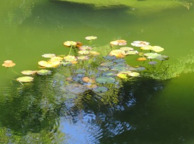 At the Japanese Garden. Reminds me of a Monet painting...