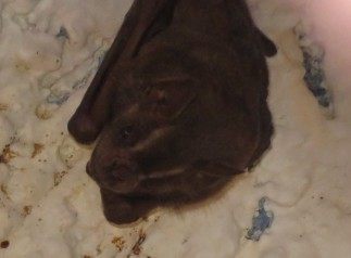 Love watching my bat friends - and I get much better pictures with my new camera. Thanks, Yvonne Capone!!!